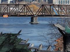 (jwc 3o2) Tags: ottawariver princeofwalesbridge graffiti blue