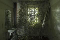 Encroachment (Matthew Hampshire) Tags: ivy overgrown hospital window bathroom
