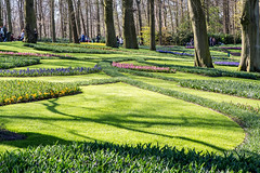 Keukenhof Gardens, The Netherlands (Jill Clardy) Tags: garden holland kuekenhof rotterdam thenetherlands bulbs flowers tulips daffodils narcissus green grass trees park verdant water paths shadows keukenhof planted 201704024b4a1983edit explore explored sunny clear day