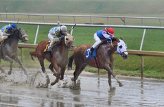 "2017-03-31 (36) r4 Jevian Toledo on #3 The Pulse (JLeeFleenor) Tags: photos photography md maryland marylandracing marylandhorseracing laurelpark horseracing jockey جُوكِي ""赛马骑师"" jinete ""競馬騎手"" dżokej jocheu คนขี่ม้าแข่ง jóquei žokej kilparatsastaja rennreiter fantino ""경마 기수"" жокей jokey người horses thoroughbreds equine equestrian cheval cavalo cavallo cavall caballo pferd paard perd hevonen hest hestur cal kon konj beygir capall ceffyl cuddy yarraman faras alogo soos kuda uma pfeerd koin حصان кон 马 häst άλογο סוס घोड़ा 馬 koń лошадь"