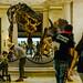 03/29/2017 -  Bio - NATURAL HISTORY MUSEUM