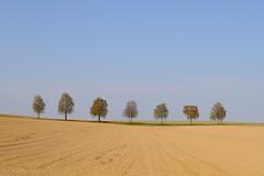 Row of birch trees (Xtraphoto) Tags: landschaft landscape allee baumreihe reihe row birken birch bäume trees thetreetales