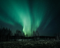 Beautiful night (JH') Tags: nikon nikond5300 nature northernlights night d5300 wideangel exposure trees tree borealis auroraborealis aurora photoshoot photography sky sigma sweden stars field forest heaven landscape longexposure clouds colors green grass blue beautiful nightscape spring naturephotograph