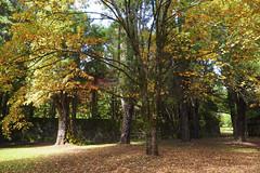 Mt Wilson 17 (trisharooni) Tags: australia autumn mtwilson breenhold