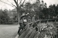 hertenkamp 1941 (Regionaal Archief Alkmaar Commons) Tags: bergen tweedewereldoorlog secondworldwar wehrmacht bezetting wo2 ww2 nazi