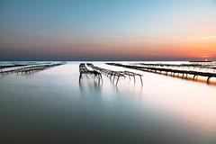 Oyster sunset ... (Grégory Dolivet) Tags: oyster huitre mer sea sunset coucherdesoleil seascape paysagemarin soleil sun flickr labernerie nikon d750 photography photographer gregorydolivet labaulephoto