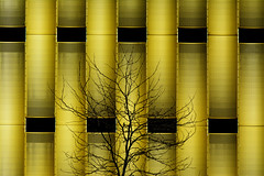 Tree and golden building (Jan van der Wolf) Tags: map170213v tree boom building gold architecture architectuur modernarchitecture goud jhk parkeergarage parkinggarage papendorp utrecht