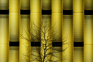 Tree and golden building