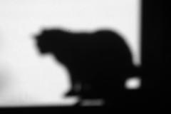 Alice's shadow (Alfredo Liverani) Tags: project project2017 0982017 project365 oneaday photoaday pictureaday project365099 project365040917 project36509apr17 2017pad italia italy italien italie emiliaromagna romagna faenza faventia faience animal kitten gatto gatta gatti gatte cat cats chats chat katze katzen gato gatos pet pets tabby furry kitty moggy moggies gattino animale ininterni animaledomestico aliceellen alice monocromo monochrome bianco nero biancoenero bn black white blackandwhite blackwhite bw neroametà canong5x canon g5x odcnowords nowords odc
