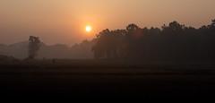 Sunrise (Thomas Retterath) Tags: india indien asia asien bandavgar 2017 nature natur baum wald forest wildlife thomasretterath