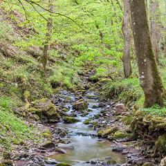 Abends im Steinbachtal (thunderbird-72) Tags: bäume grün mettlachdreisbach deutschland nikond90 steinbachtal wasser grüntöne bach frühling moos wald steinbach stein mettlach saarland de frühlingserwachen springawakening