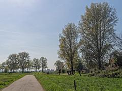 Zons am Rhein (KL57Foto) Tags: 2017 april deutschland europa frühling germany jahreszeitenundwetter kl57foto kontinente landschaft nrw natur nordrheinwestfalen penepm2 rheinland zons zonsamrhein spring dormagen dormagenzons