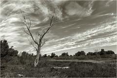 ¡Clama al Cielo! (Fernando Forniés Gracia) Tags: españa aragón zaragoza pastriz laalfranca paisaje landscape nubes cielo naturaleza blancoynegro bw monocromático virado