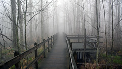 A foggy morning on the trails (PhotonPirate) Tags: fog trail boardwalk landscape wetlands nature spring wood