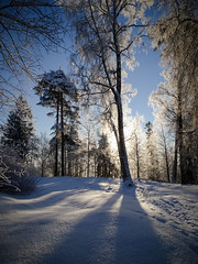 hide and seek (Māris Pehlaks) Tags: landscape winter aluksne nature frost sunlit outdoor latvia snow sun blue shadows vidzeme sunset sky morning trees branches backlit white