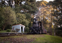 Sunset (michaelgreenhill) Tags: pbr nobelius victoria sunset climax australia 1694 trains twilight evening steam puffingbilly emerald au