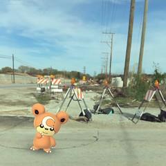 (velvetstardust22) Tags: teddybear teddy spring friday street teddiursa pokémongo pokémon