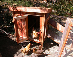 "Chicken Annex • <a style=""font-size:0.8em;"" href=""https://www.flickr.com/photos/87478652@N08/15163289450/"" target=""_blank"">View on Flickr</a>"