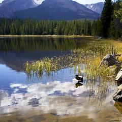 Yesterday at Bierstadt Lake (fotovivo / peevish me) Tags: autumn lake mountains water 35mm square duck grasses rockymountains rmnp bierstadtlake sonyrx1 fotovivo