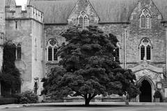 wells cathedral (Navarra Photography) Tags: blackandwhite tree cathedral wells
