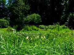 IMG_5876 bb Juni (Traud) Tags: pool germany bayern deutschland bavaria grün teich garten steg naturschutzakademie