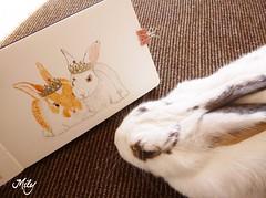 Happy World Rabbit Day 2014 (Milagritos9) Tags: portrait bunny art retrato illustrated honey his happybunny whiterabbit petportrait artlove pupito petjournal bunniesbunny journalmoleskine conejitoblanco rabbitportrait rabbitjournal rabbitmoleskine mascotaretrato pupitorabbit pagesmoleskine worldrabbitday2