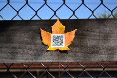 Sonnet 73, 02 (oschene) Tags: williamshakespeare qrcode northamptonma sonnet73 digitalgraffiti