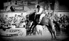 Hay que saltar (Eduardo Amorim) Tags: horses horse southamerica criollo caballo uruguay cheval caballos cavalos prado montevideo pferde cavalli cavallo gauchos pferd chevaux gaucho  nimo amricadosul beijos montevidu uruguai gacho amriquedusud  gachos  suramrica amricadelsur sdamerika crioulo caballoscriollos criollos jineteada  americadelsud gineteada crioulos cavalocrioulo americameridionale caballocriollo campeiros campeiro eduardoamorim cavaloscrioulos infinitexposure pasomolinosudamrica