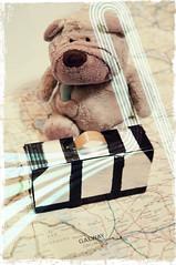 02.10.14: Packed everything!? (Wang Wang 22) Tags: dog cute pug plush 365 nici pictureoftheday mops wangwang