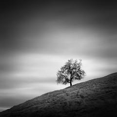 Sans Soul - II (maxxsmart) Tags: california winter sky tree texture 6x6 film grass clouds analog mediumformat square march kodak walk grain d76 hills scatter marincounty toned sixbysix 2014 hasselblad501cm ilforddelta100 zeiss80mmcb