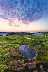 Bungan Beach Rock Shelf (Brian Bornstein) Tags: seascape clouds sunrise moss sydney coastline monavale northernbeaches bungan rockshelf sydneynorthernbeaches australiancoastline bunganbeach canon6d brianbornstein