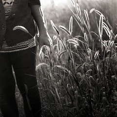 The Grace in Each Blade of Grass (Miss Marisa Renee) Tags: blackandwhite sunlight mamiya film monochrome grass jennie sunny grace 120film scanned dreamy mywork sunlit graceful greyscale grassy mamiyarb67 scannedfilm marisarenee fall2014