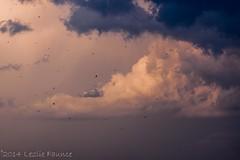 Buzzards in the Storm (lezlievachon) Tags: