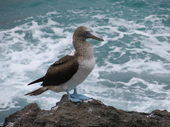 Galapagos - San Cristobal-157
