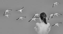 Bird Watching (swong95765) Tags: woman girl birds lady flying gulls watching pondering observing
