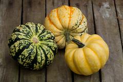 Squash (Mukumbura) Tags: food orange green vegetables yellow gardening gourd squash variegated produce colourful horticulture