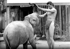 Johnny Weismuller with elephant during filming - Silver Springs (State Library and Archives of Florida) Tags: silversprings actors florida elephants motionpictures johnnyweismuller brucemozert tarzanfilms