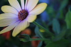 IMG_3353 (wood_photography) Tags: nature flowerpower flowersarebeautiful
