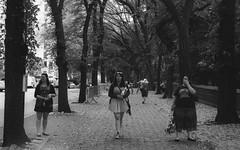 The Perfect Three (instagram.com/lanolan) Tags: street city nyc newyorkcity trees blackandwhite bw newyork film leaves 35mm outside three women day pentax manhattan streetphotography sidewalk 400 ilfordhp5plus400 pentaxmesuper ilford linedup synchronized synchronous straightline