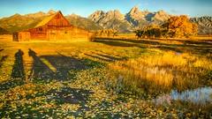 early morning shadows (Marvin Bredel) Tags: unitedstates moose wyoming grandtetonnationalpark marvinbredel
