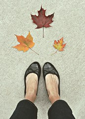 279/365 ~ autumn at my feet (three times a charm) Tags: autumn fall feet leaves maple shoes 365 project365 365days fromwhereistand