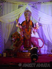 DSCN0503 (ankit10217) Tags: pune durga shakti parvati ambika sati bhairavi katyayani bhuvaneshwari chinnamasta navdurga mahagauri kaalratri siddhidatri kushmanda chandraghanta dhumavati skandamata brahmacharini vaishnomaa shailaputri durgapuja2014 navratri2014 ankitahuja shivaradni bhavaani navratridurgapuja2014