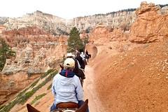 P9080288 (bluegrass0839) Tags: canyon national hoodoo bryce zion zionnationalpark brycecanyon nationalparks narrows hoodoos horsebackride parkthe