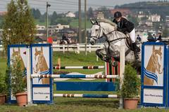 DSC05816_s (AndiP66) Tags: horse oktober macro sports sport schweiz switzerland mark sony luzern sp ii di if alpha tamron concours 77 pferd equestrian derby f28 ld horsejumping 70200mm wettbewerb 2014 springen eschenbach kantonsolothurn inwil reithof springreiten cantonsolothurn stleodegar andreaspeters pferdespringen 77m2 a77ii ilca77m2 77ii slta77ii