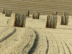 Cte d'Opale, paysage agricole (Ytierny) Tags: france horizontal paysage champ foin pasdecalais graphisme littoral meule ctedopale agricole boulonnais sitedesdeuxcaps ytierny