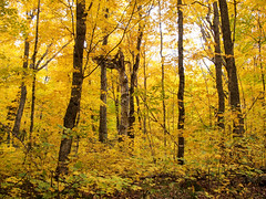 P9258008 (zrim) Tags: autumn minnesota fallcolors hovland 2014