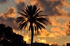 DSC_3904 Sunset en El Puerto (David Barrio Lpez) Tags: sunset espaa atardecer spain nikon andalucia cadiz d90 elpuertodesantamaria guadalete nikond90 davidbarrio davidbarriolpez