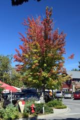 Autumn Colours (Worthing Wanderer) Tags: washington usa sunny summer hot sea mountains islands sanjuanislands orcasisland anacortes eastsound