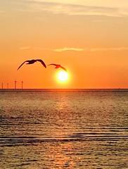 Sunset over new Brighton wirral (alex kerr aviation photography) Tags: summer lowsun seagull beach merseyside moretonshore sunset wirral newbrighton
