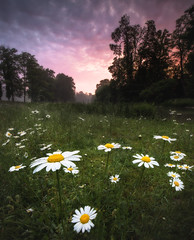 Aschaffenburg, Park Schönbusch (christian.denger) Tags: aschaffenburg schönbusch park sunset sonnenaufgang tau canon canon1635f4 sirui lee